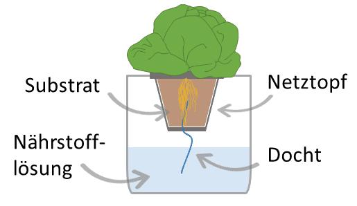 Dochtsystem oder Wicksystem der Hydroponik